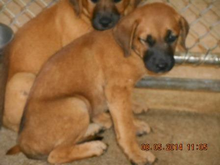 Mix Breed puppy M brown